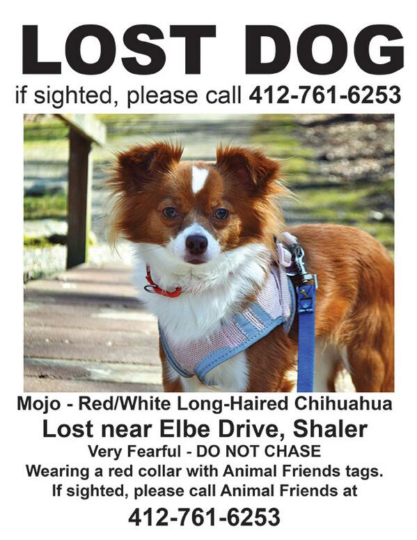 LOST DOG ALERT. Please RT! http://t.co/NfIXIP7IVj