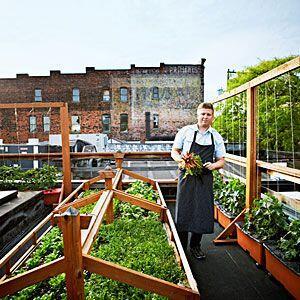 Bastille Cafe & Bar kweekt eigen #groenten op het #dak, verser kunnen ze het niet maken. #stadslandbouw in beeld http://t.co/iqXpNsi6Qy