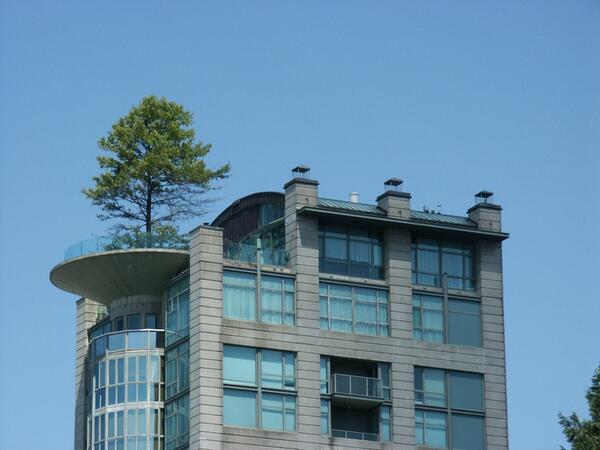 We gaan er maar even vanuit dat de #dakconstructie berekend is op de #dakbelasting van de boom http://t.co/8HSbkzDzXp