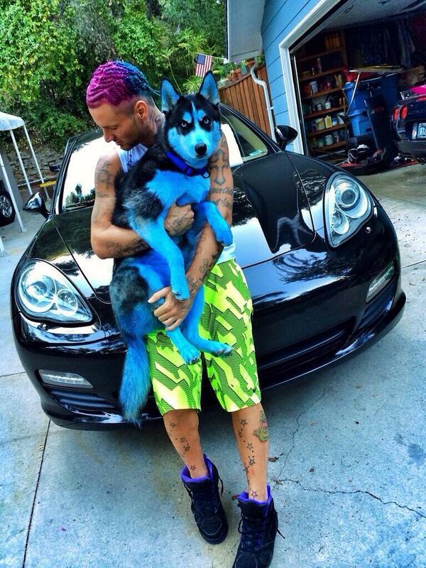 Riff Raff heeft zijn hond blauw geverfd. Einde bericht.  http://t.co/m8kb41kMhd
