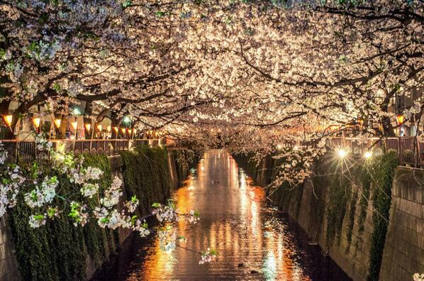 All those moments will be lost in time... like sakura petals falling into the river http://t.co/I8y6jhgE2e