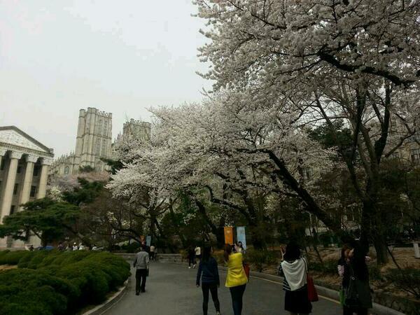벚꽃피고있어염!!!!!! http://t.co/WEqy2KAeJ2