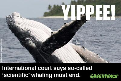 BREAKING: Intl Court of Justice rules that Japan must immediately end #whaling program! http://t.co/8itYHcrRPp http://t.co/aq20SyahTC