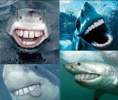 Sharks aren't scary with human teeth! http://t.co/VlW6avYLAe