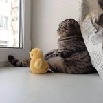 "RT @CatPornx: ""Its a big world out there, Ducky."" . http://t.co/t6jhwLPzaH"