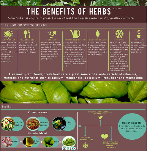 We have an infographic all about herbs! Grow them in your garden this spring #NewBeginnings http://t.co/2qeMocYp93 http://t.co/krGPo2dQ3q