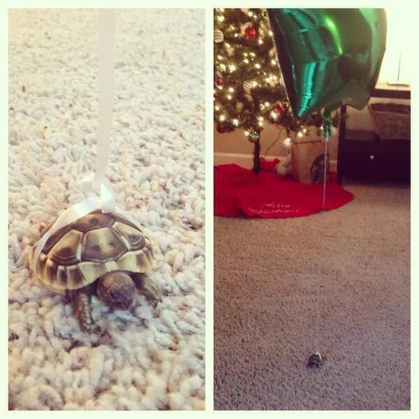 How to let your turtle roam around without losing him: http://t.co/ORS4qtGm02