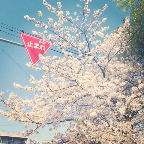 止まりたくなる標識が咲いてた http://t.co/L4RxsJY8n1