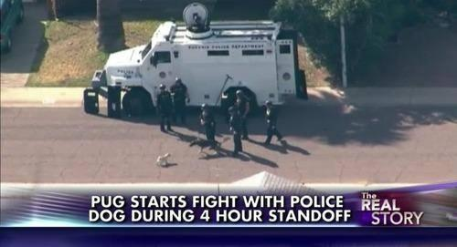 You were sittin' home watchin' your TV, while this dog was participatin' in some anarchy. http://t.co/dQxOJMnUTS