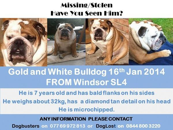 Please RT to bring #SCRUNCHER home to Jill @JFTVQVC He is missing from Windsor UK http://t.co/KRe1WXE8wI EVERY RT HELPS!