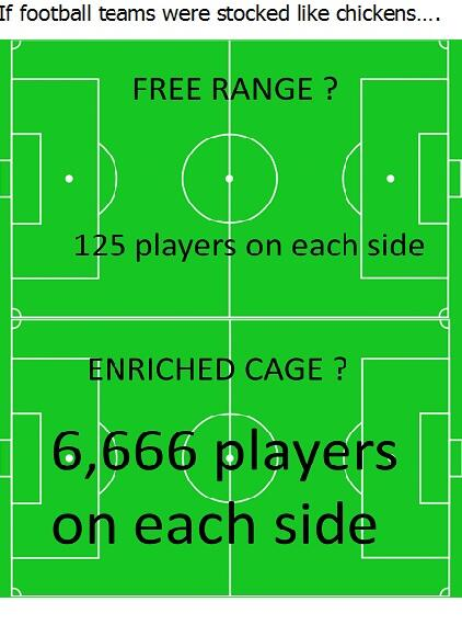 Ever wondered what the pitch would look like If football teams were stocked like #chickens ? http://t.co/smz0cPlaBH