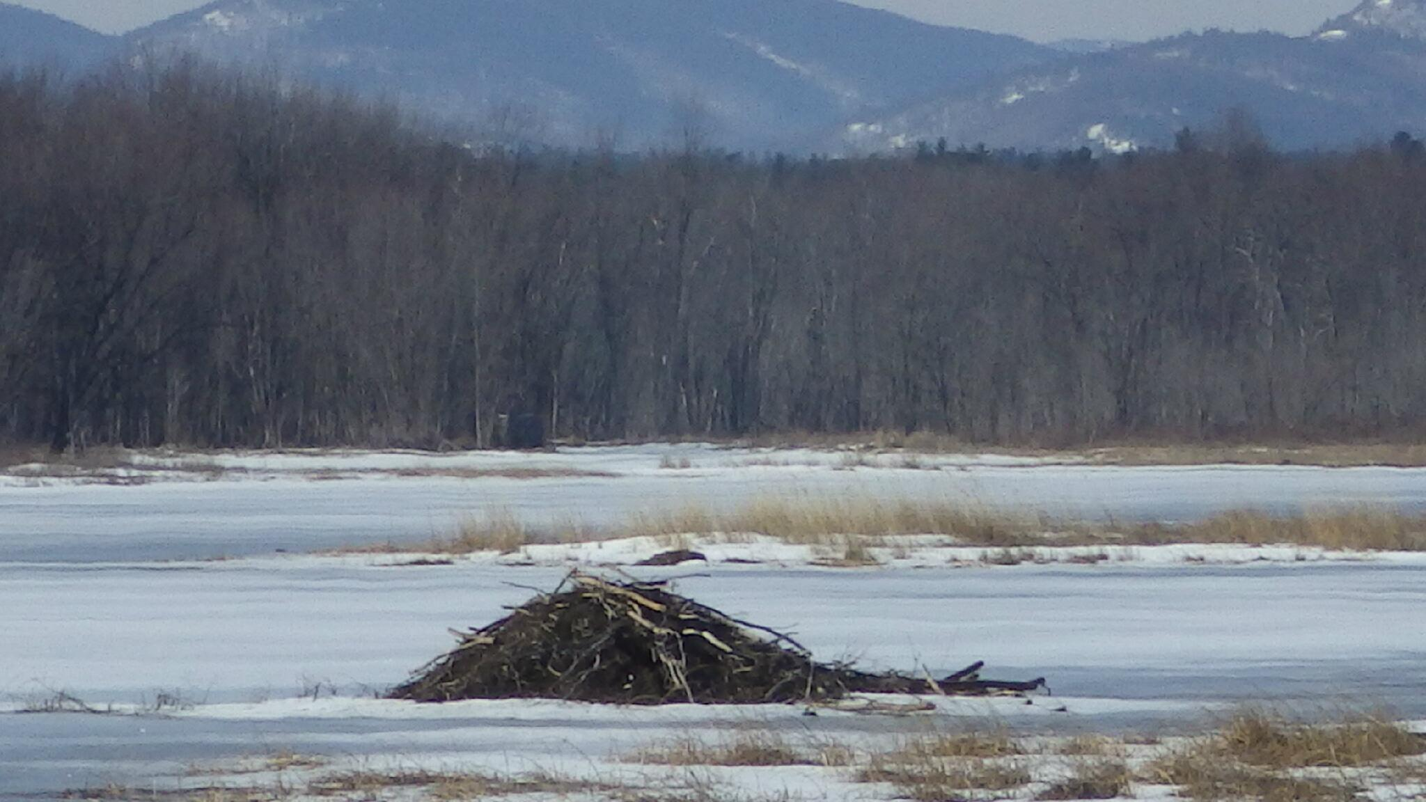 Spring time at Ausable Marsh. #adirondacks #lakechamplain http://t.co/e6iUX1YyZF