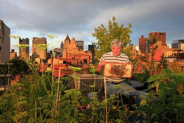 #NY #beekeeping is keeping up with #sustainability trends on our #rooftops @UrbGardenersRep http://t.co/nv2bHksGos