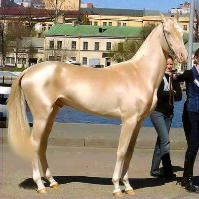 This is the world's most beautiful horse! http://t.co/n2yj1ftDDe