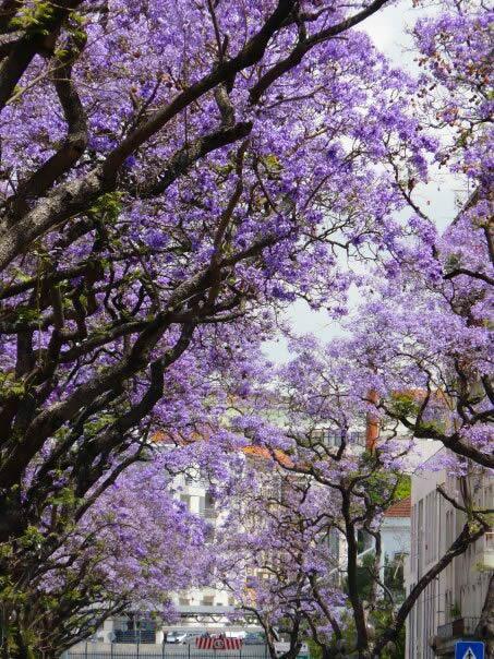 الربيع في سيتوبال، البرتغال - Spring in Setúbal, Portugal   #معلومات_سياحية http://t.co/2vgQAwwnii