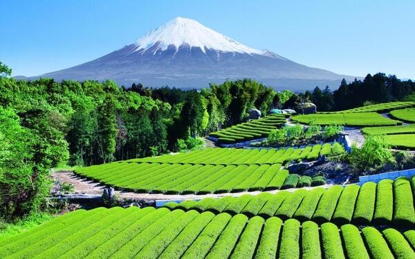 #غرد_بصورة جبل فوجي أعلى قمة في اليابان http://t.co/t7q48ABvbA