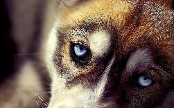 Глаза верного друга http://t.co/wuGsqvUH09