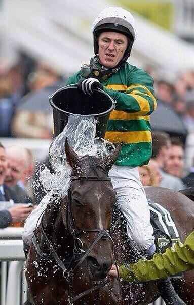 Good picture of AP helping to cool Double Seven off yesterday. #GrandNational http://t.co/oiDdyWxhaO