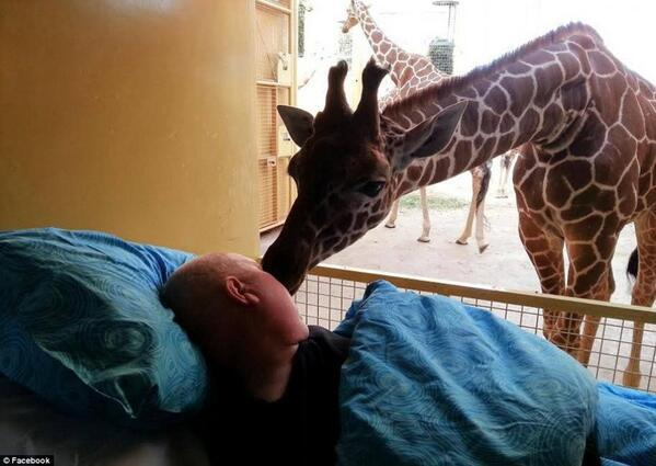 A pic of a giraffe and a dying man shared a beautiful moment during their last goodbye. http://t.co/5RsJ34Pcnc