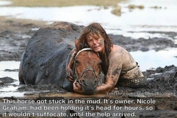 This horse got stuck in the mud . . . http://t.co/Vyed1j5js8