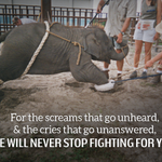RT @peta: Every day 100s of animals are tortured in the most PAINFUL spectacle in the world. RT if u #BoycottTheCircus!