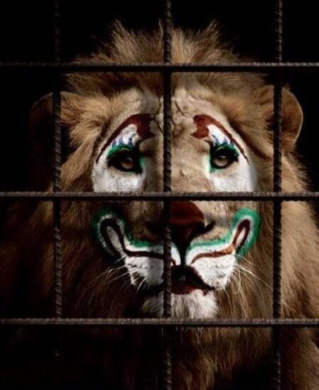 Panamá se convierte en el primer país en prohibir el circo con animales, ¡VIVA! http://t.co/mMwkdv4Jyi