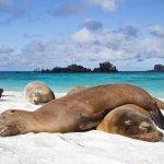 RT @FotoEcuador: Cuando Dios creo las Islas Galápagos se inspiro en el paraíso #Ecuador http://t.co/betdqhvMN3