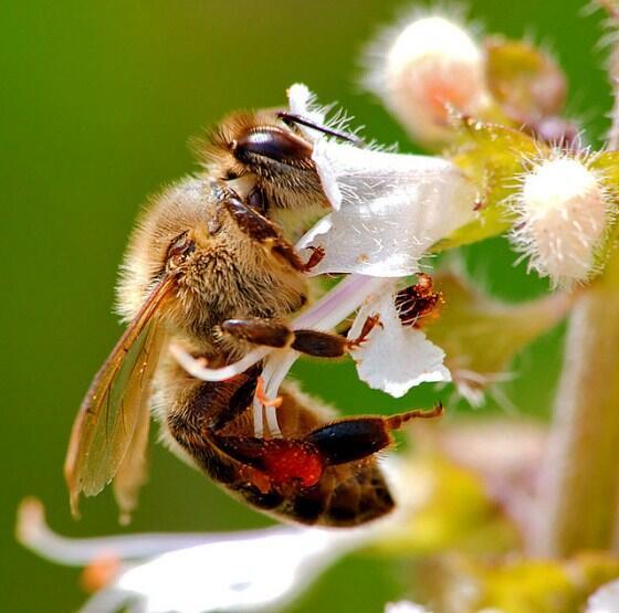 Cientistas desvendam a 'dança' das abelhas: http://t.co/Zq1VCdpAei Descoberta pode ajudar na preservação da espécie http://t.co/qzyJkAaEWr