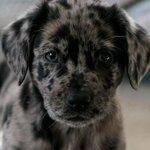 Oreo puppy  http://t.co/sOoLyj7QOT