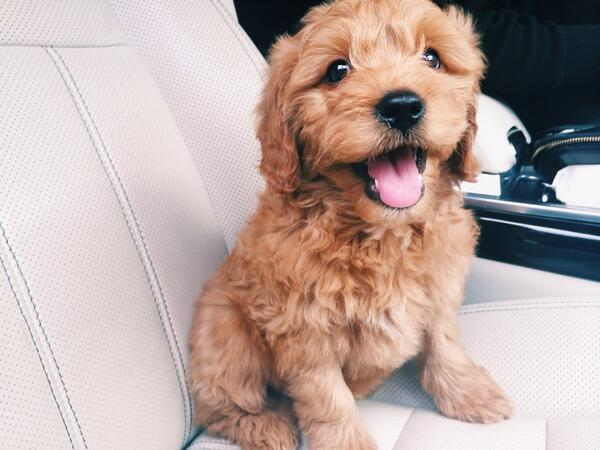 50 Cutest Puppies You Need To Look At Now