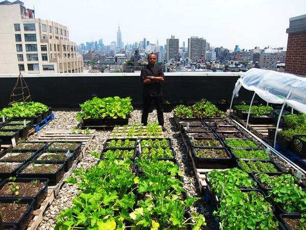 #stadslandbouw op daken als 2-ledige oplossing, minder transport, en betere inzet van schaarse ruimte, dus #duurzaam http://t.co/c8BLzZhBBB