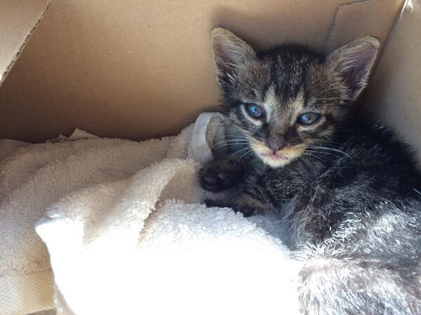 אתמול מצאתי את החתלתול הקטן הזה בכביש ולקחתי אותו הביתה. עכשיו אנחנו מחפשים לו בית חם #רטווטו http://t.co/PSDoxYWMGL