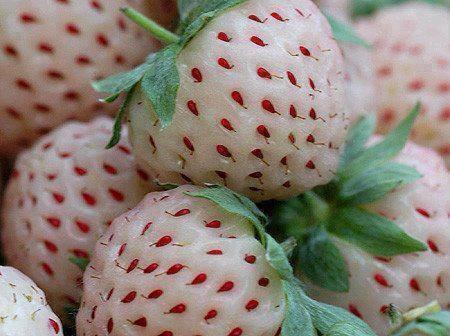 Pineberries, which look like a white strawberry but taste like a pineapple. http://t.co/RdRQd0VvHc