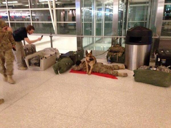 A military dog was spotted on the airport, protecting a soldier while he sleeps. http://t.co/Wtqs9HexdM