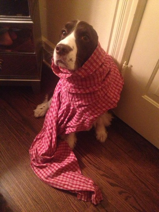 Sam Smith @ThatSamSmith: For no reason whatsoever, here is my dog, in pajama pants, looking unhappy about it. http://t.co/ZcAbt0oKow
