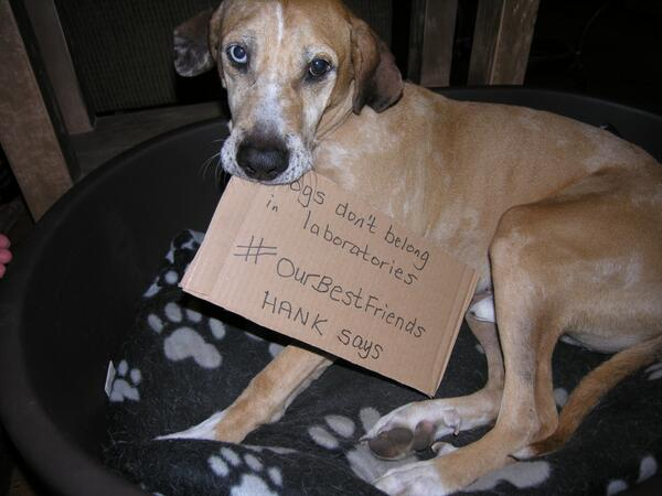 Please join us & create your own message like Hank and speak out on World Day for #OurBestFriends in #Laboratories. http://t.co/Eg9fXiUnXm