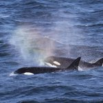 Photo: In honor of #EarthDay: orcas create a misty ❤ over Monterey Bay. http://t.co/MJQMjEa76K