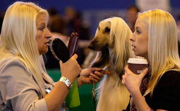 """@micahgoulart: Hands down the best photo ever taken at a dog show. http://t.co/cvMFiMT4cY"""