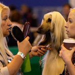 Hands down the best photo ever taken at a dog show. http://t.co/ouKlVbiK24