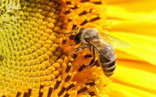 Sábado 26 abril Jornadas de Apicultura. Visita al apiario, charlas,  cata de mieles y talleres infantiles. http://t.co/ykGRSB9ptv
