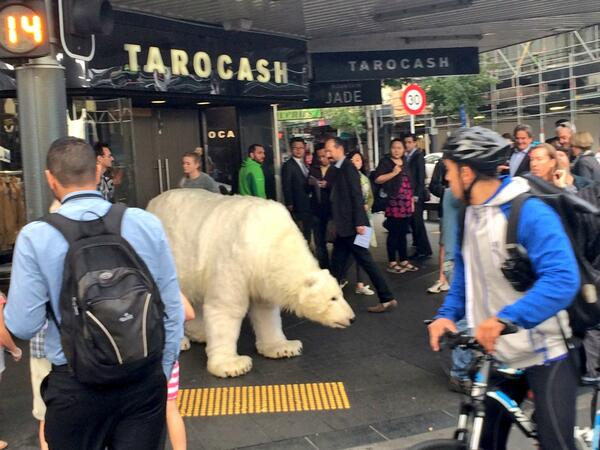 Waited with a life sized robotic polar bear to cross the road this morning. As you do. http://t.co/MbOTOWNYxr