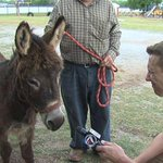 RT @ColinDeaver: Tonight on @KSWO_7NEWS at 6: I went 1-on-1 with the Bray-Doyle Donkey, the number 1 mascot in OK. Tune in! #okpreps http://t.co/Xqd5fQCuPg