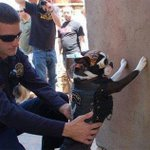 Do dogs in #Minneapolis get frisked often? RT @BananaKarenina: Best part of #myNYPD = pics of dogs being frisked http://t.co/dHFdbPslqj