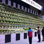 Mourners pay their respects to victims of South Korean ferry disaster at a memorial altar in Ansan http://t.co/WP8vkZi4Xf