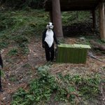 RT @Design_Week: Keepers at Chinas Panda Research Centre have to dress up to mimic the wild: http://t.co/YTPXcIp8gN (via @guardian) http://t.co/XNxBoiEaKY