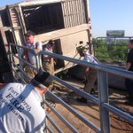 RT @FortWorthFire: Fort Worth FD Technical Rescue Crews still working to extricate livestock on overturned trailer. http://t.co/S4EFya2Btx