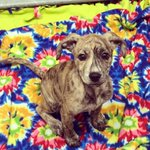 ICYMI: Thalia is looking for a home today! http://t.co/VYRDPXZyjW