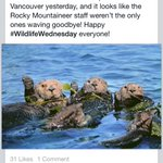 Just another reason to love Canada and it doesnt involve bikes! #beavers #vancouver @rmountaineer http://t.co/ggPItRpbx2