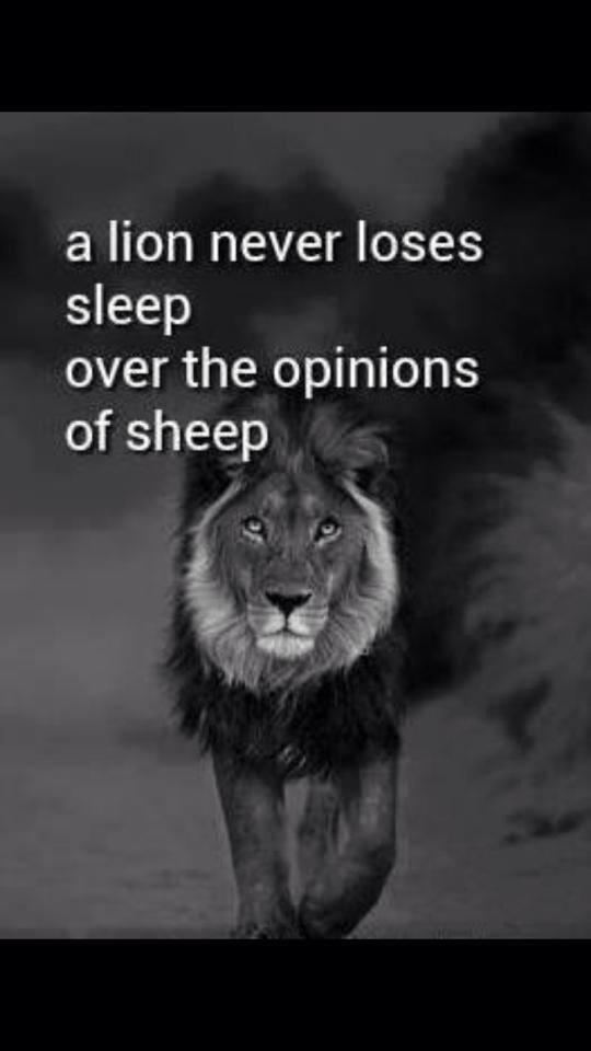 PIC; A Lion never loses sleep,over the opinions of sheep... http://t.co/AFv2OoT0IE
