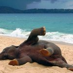 Baby Elephant playing at the beach for the first time in his life http://t.co/XvLTWPikT2